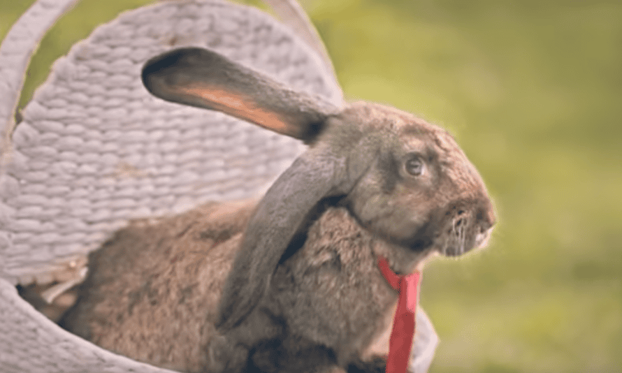 A still from the Polish health ministry video encouraging people to 'breed like rabbits'.