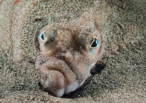 Coast and marine Wales category winner: Plaice Face in Criccieth Beach, Gwynedd, by Mark Thomas from Northwich, Cheshire