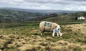 A farm in Barkisland, West Yorkshire sprayed NHS on to a ewe and her lamb