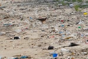 Rubbish on Nim Shue Wan beach on Hong Kong's Lantau Island