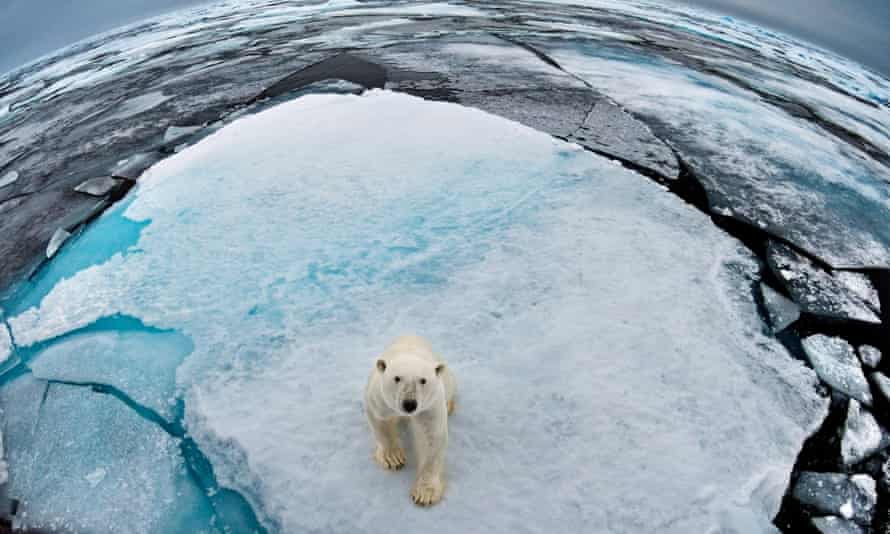 'Arctic sea ice is the vital seal-hunting platform of the polar bear.'