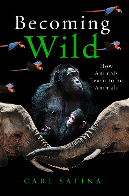 Becoming Wild by Carl Safina, UK edition.