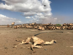 Drought is killing thousands of animals in Marsabit, in northern Kenya