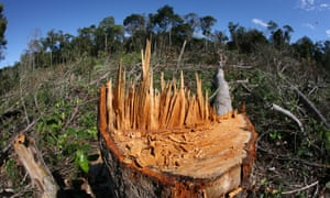 Deforestation in the Brazilian Amazon