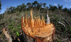 Large tracts of tropical forests, such as this one in the Amazon, are being lost to farmland.