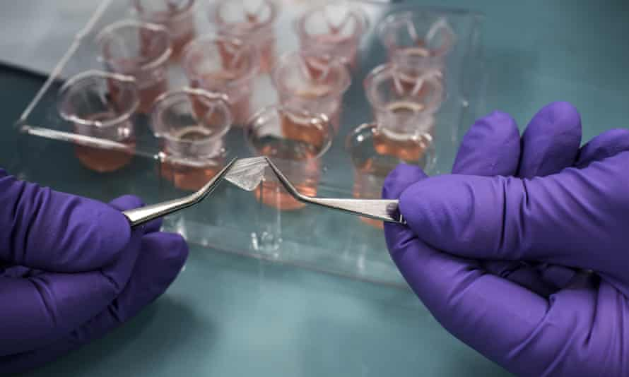 A laboratory owned by L'Oréal grows cells to produce human tissue that can be used as an alternative to animal testing on cosmetics.
