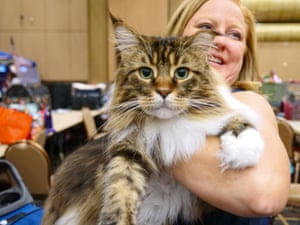 A cat with its owner at Las Vegas's biggest cat show