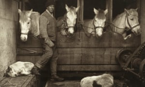 Herbert Ponting's photograph of Captain Oates and Siberian ponies on board the Terra Nova.