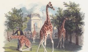 The Emperor's giraffe by Eduard von Gurk
