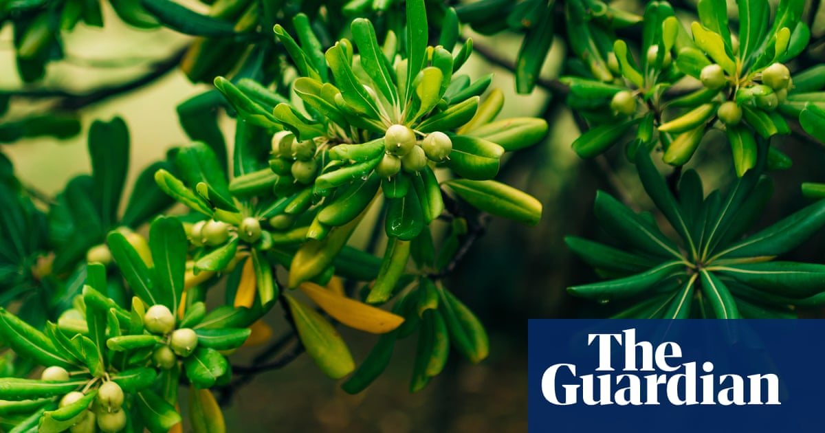Ask Alys Which Fragrant Plants Best Suit A Narrow Garden Life