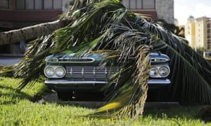 A Chevrolet Bel Air classic car sits under a fallen palm tree from Hurricane Irma in Marco Island, Florida.
