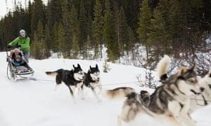 Family dogsledding in snow