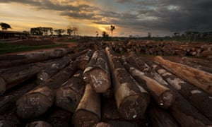 Timber operations in Mindourou, Cameroon, run by Pallisco, a sustainable logging company.
