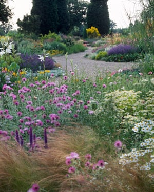 Dry summer perennial bed with gravel pathways in Beth Chatto's garden at Elmstead, Essex