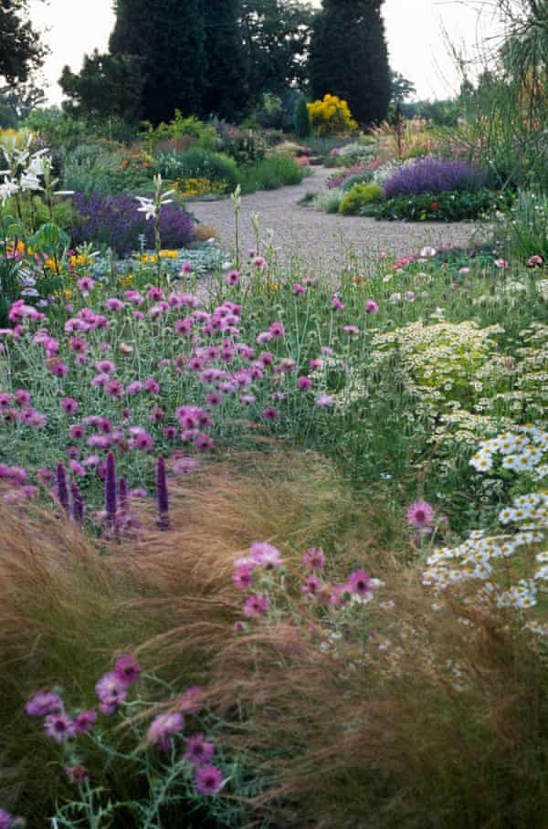 A dry summer perennial bed with gravel pathways at Beth Chatto's garden at Elmstead, Essex.