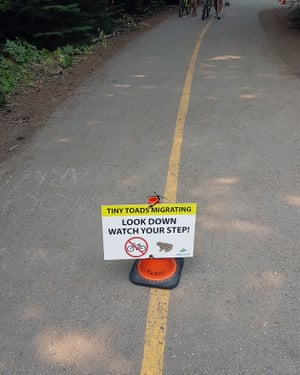 Sign on a trail in Whistler, British Colombia, alerting the public to the presence of migrating western toads (Anaxyrus boreas). Since 2008, the municipality has been enlisting the help of volunteers to help the toads to their breeding grounds. The volunteers, in this case on the Lost Lake trail, ask cyclist to dismount and walkers to look down.