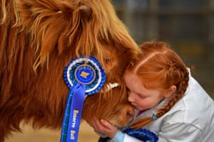 Kate Cameron, 8, with Abernethy at the 119th annual autumn sale of pedigree highland cattle in Oban, Scotland