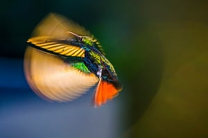Flying over sunshine by Kristhian Castro in Cali, Valle del Cauca, Colombia