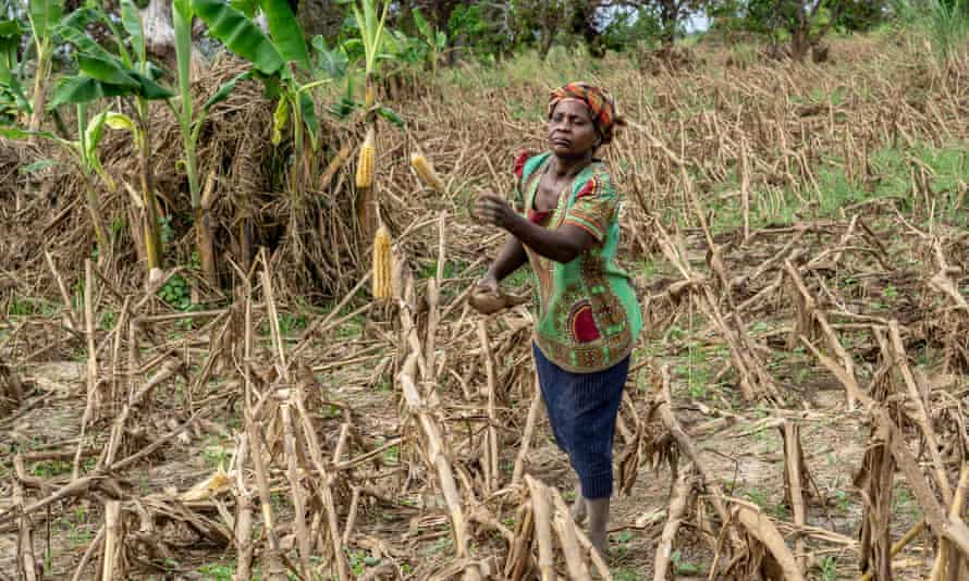 Maria Jose's maize crop in Batissa, Mozambique, was destroyed by Cyclone Idai just before the harvest season