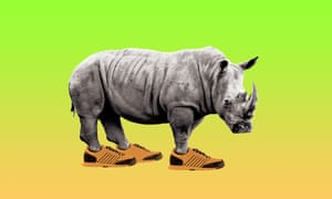 Composite of rhino in trainers against green and orange background