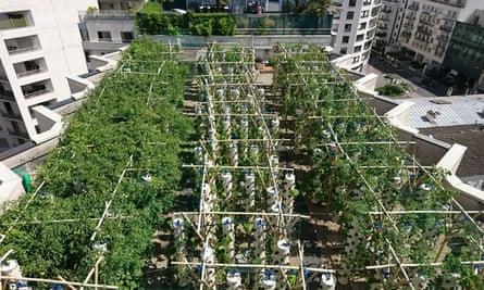 A rooftop farm in Paris run by Agripolis, an urban farming company.