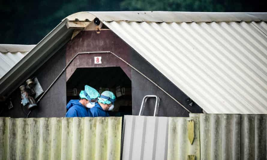 Workers at a mink farm where animals are being culled, in Deurne, The Netherlands.