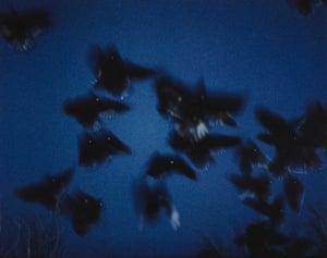 'Great use of blur' Raven Scenes 11 from Masahisa Fukase's Ravens