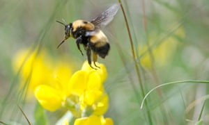The Bees' Needs campaign launched in 2014 called on the public to do more to help insect pollinators.