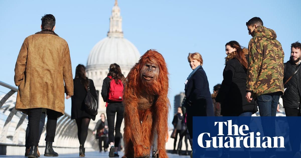 Iceland to let loose animatronic orangutan after Christmas ad ban