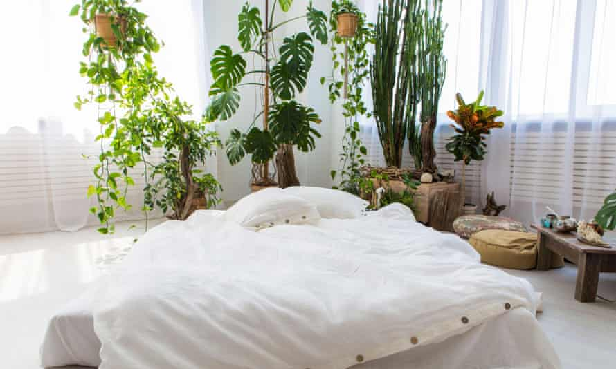 A sunny bedroom with lots of plants