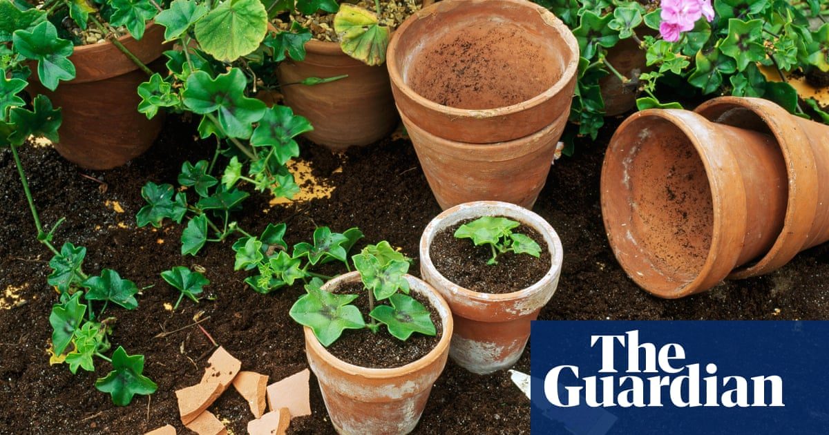 How to grow new plants from cuttings | Life and style | The Guardian