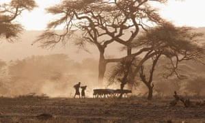Masai tribesmen in Kenya … evidence provided by ancient DNA has profoundly altered the 'Out of Africa' argument.