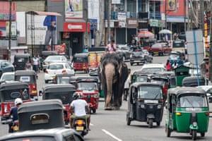Colombo, Sri LankaA mahout rides an elephant among the traffic down a street in Piliyandala, a suburb of Sri Lanka's capital