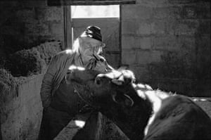 Archie Parkhouse and his cow, Millhams, Dolton, 1980