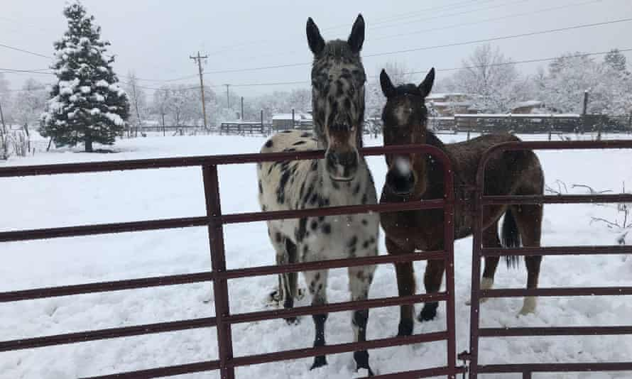 Horses stand in in Taos, New Mexico, on 11 January, where the storm dropped around 8in of snow.
