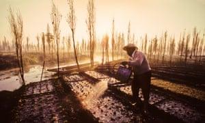 xochimilco farmer