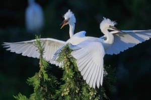 Egrets are seen at the Qidashan Forest Park in Xuyi County, east China's Jiangsu Province
