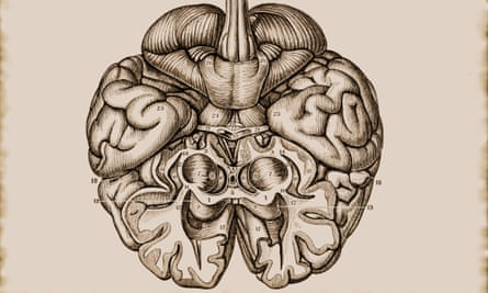 Illustration of the cerebrum brain hemisphere