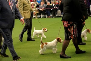 Nearly 3,000 entrants vie for prizes at the show