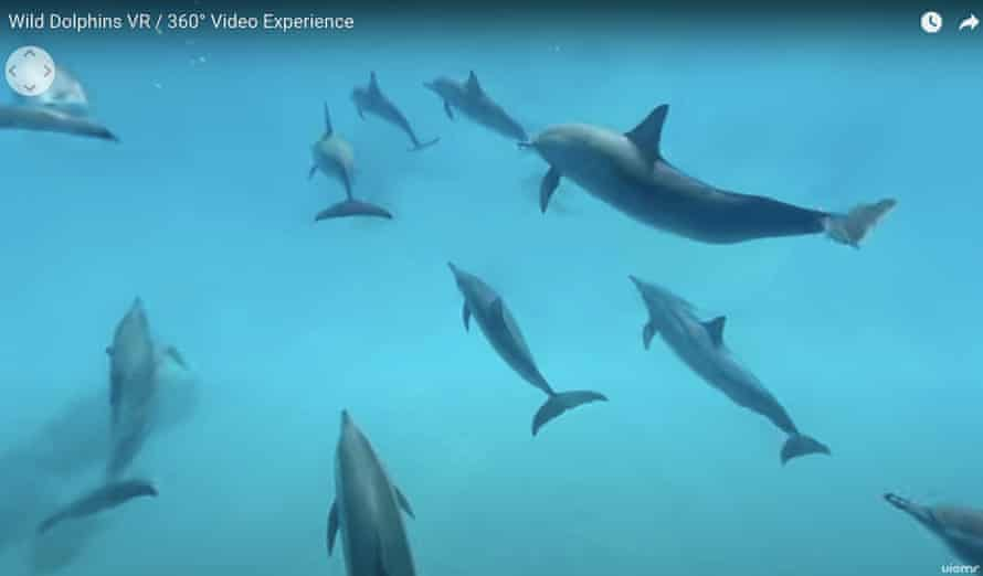 Screenshot from the Dolphin Swim Club's 360 video.