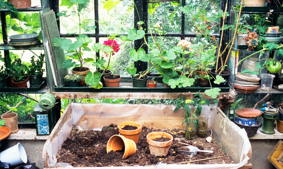 How To Reuse Old Compost Gardening Advice The Guardian