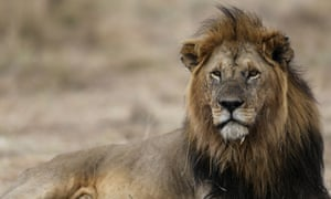 The Trump administration has quietly published new guidelines allowing the importation from Zimbabwe and Zambia of lions shot for sport.
