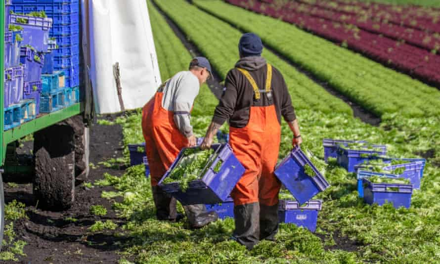 Is your farm facing problems with recruitment of seasonal workers?