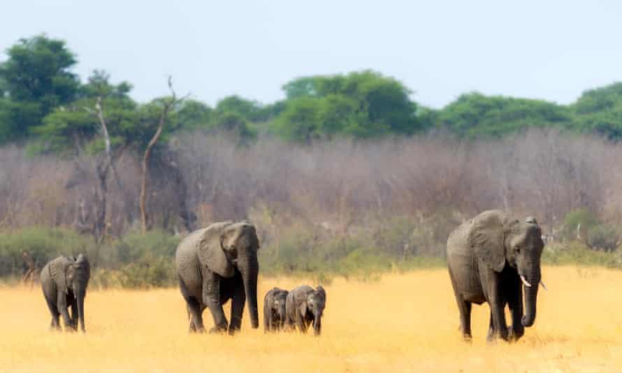 Elephants heading towards a waterhole in Hwange national park