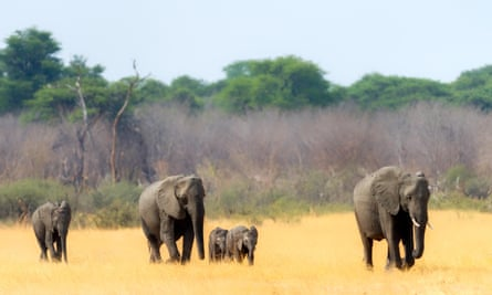 Elephants heading towards a waterhole in Hwange national park