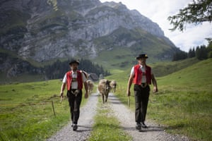 Alpine cattle herders