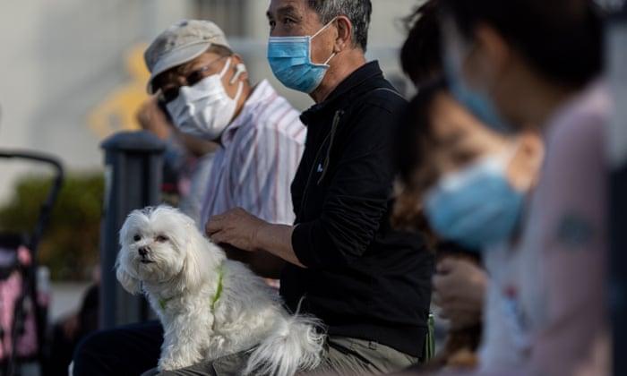 Coronavirus in dogs symptoms