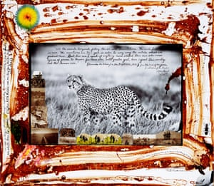 Single Cheetah, 1960/2007