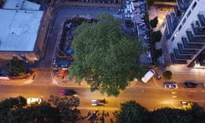 The Happy Man tree, as seen from a drone.