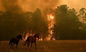 Bushfire NSW